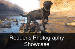Readers photo showcase