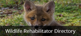 Wildlife Rehabilitator